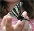 butterflyonfinger.thumb